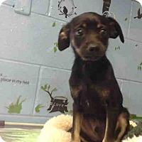 Adopt A Pet :: URGENT on 3/29 SAN BERNARDINO - San Bernardino, CA