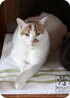 Domestic Shorthair Cat for adoption in Lancaster, Massachusetts - Ruby