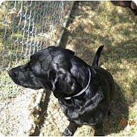 Adopt A Pet :: Cole - Altmonte Springs, FL