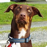Adopt A Pet :: Fritz - Grants Pass, OR