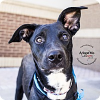 Adopt A Pet :: Captain - Mooresville, NC