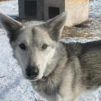 Adopt A Pet :: Kimo - Egremont, AB