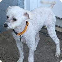 Adopt A Pet :: Kassidy - Norwalk, CT