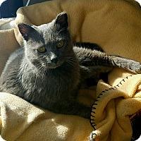 Adopt A Pet :: Grayson James - Rochester, MN