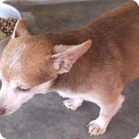 Adopt A Pet :: Fang - Bonifay, FL