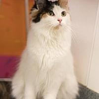 Adopt A Pet :: Starling - Mt. Pleasant, MI