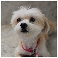 Adopt A Pet :: SADIE - Glendale, CA