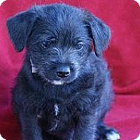 Adopt A Pet :: MICHAEL - Torrance, CA
