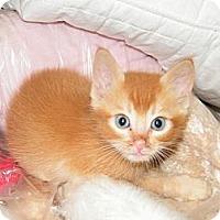 Adopt A Pet :: Cheez-it - Modesto, CA