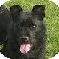 Adopt A Pet :: Pepper - Hamilton, ON