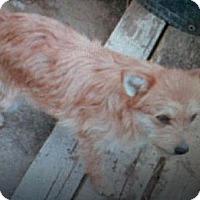 Adopt A Pet :: Prince - Hilham, TN