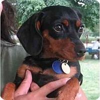 Adopt A Pet :: Dallas - Nashville, TN