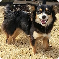 Adopt A Pet :: Jilly-Adoption pending - Bridgeton, MO