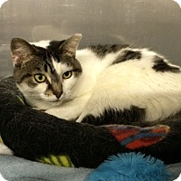 Adopt A Pet :: Birdie - Byron Center, MI