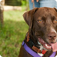 Adopt A Pet :: Jesse - hollywood, FL