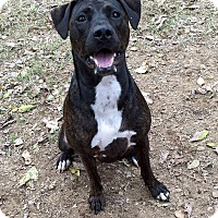 Adopt A Pet :: Maple - Byhalia, MS