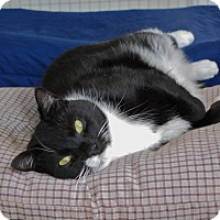 Adopt A Pet :: Bandit - Trevose, PA