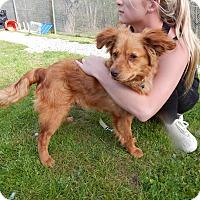 Adopt A Pet :: Jerry - West Deptford, NJ