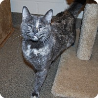 Adopt A Pet :: Sassy - Council Bluffs, IA