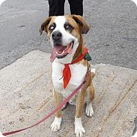 Adopt A Pet :: Django - Pierrefonds, QC