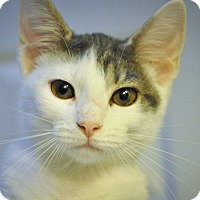 Adopt A Pet :: ISABEL (Super sweet) - New Smyrna Beach, FL