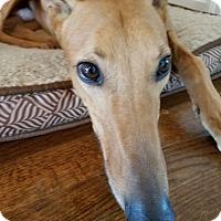 Adopt A Pet :: PJ Rusty Nail - Shelbyville, KY