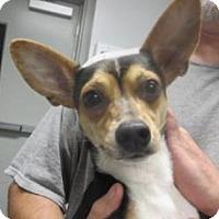 Adopt A Pet :: Smokey - Lincolnton, NC