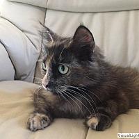 Adopt A Pet :: Juliet - Westchester, CA