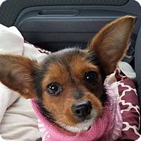 Adopt A Pet :: Widget - Bucks County, PA