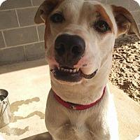 Adopt A Pet :: Lyla - Ocala, FL