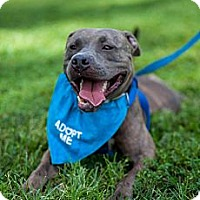 Adopt A Pet :: Artie - Hollywood, FL