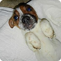 Adopt A Pet :: Missy - South Jersey, NJ