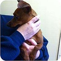 Adopt A Pet :: Rusty - Springvale, ME