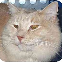 Adopt A Pet :: Caspian - Annapolis, MD
