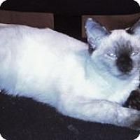 Adopt A Pet :: K-Ellie3-Cloud - Colorado Springs, CO