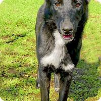 Adopt A Pet :: Kora what a sweety - Sacramento, CA