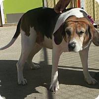 Adopt A Pet :: Daisy - Muskegon, MI