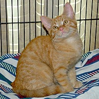 Adopt A Pet :: Flurry - Sunderland, ON