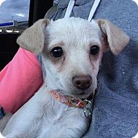 Adopt A Pet :: Cher - Tumwater, WA