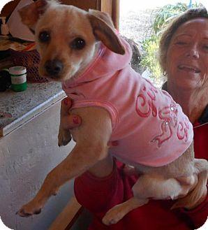 Beagle/Dachshund Mix Dog for adoption in Yucaipa, California - Tina
