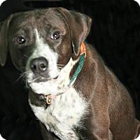 Adopt A Pet :: Mocha - Lufkin, TX