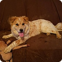 Adopt A Pet :: Roxanne (has been adopted) - Burlington, VT