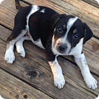Adopt A Pet :: Laiken - Boston, MA