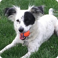 Adopt A Pet :: Willow - Lindsay, CA