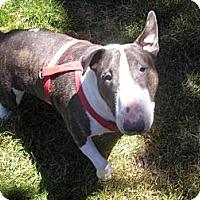 Adopt A Pet :: Nikki - Portland, OR