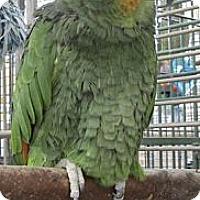Adopt A Pet :: Casey - Edgerton, WI
