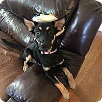 Adopt A Pet :: Tori - Albany, NY