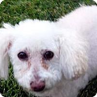 Adopt A Pet :: MADDI - Mission Viejo, CA