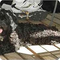 Adopt A Pet :: Onyx - Portland, OR