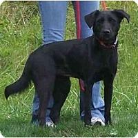 Adopt A Pet :: Star - Toronto/Etobicoke/GTA, ON